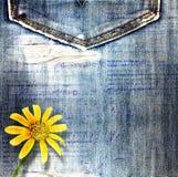 Piękny kolor żółty kwitnie na błękitnych tło cajgach Zdjęcie Royalty Free