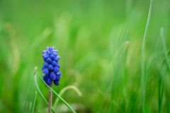 Piękny kolorowy hiacyntowy tło Zdjęcie Royalty Free