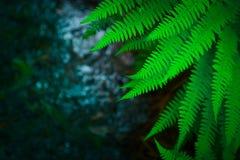Piękny kolorowy jaskrawy - zielona paproć opuszcza tło Egzot f Obrazy Royalty Free