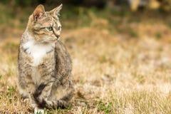 Piękny kolorowy kot jest przyglądający w naturę obraz royalty free