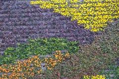 Piękny kolorowy kwiatu wzór na ściennym tle w Szanghaj Obrazy Royalty Free