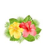 Piękny Kolorowy poślubników kwiatów okwitnięcie i Tropikalni liście ilustracji