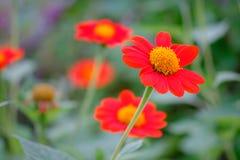 Piękny koloru kwiat w Tajlandia Asia peleng część o Obrazy Royalty Free
