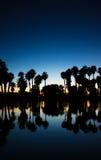 piękny komputerowy przedpole wytwarzał wizerunku palmowej fotografii realistycznych zmierzchu drzewa Obraz Royalty Free