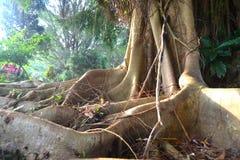 Piękny korzeń drzewo Obrazy Royalty Free