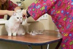 Piękny kot dostaje ostrzyżenie obrazy stock