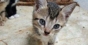 Piękny kot fotografii sri lanka obrazy royalty free