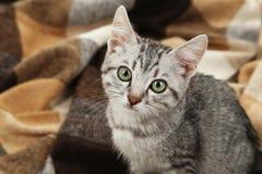 Piękny kot na ciepłej szkockiej kracie, zamyka up Fotografia Stock
