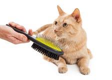 Piękny kot Szczotkuje osobą obrazy royalty free