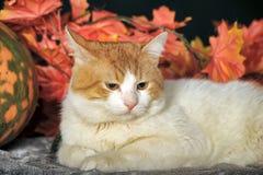 Piękny kot z banią i jesieni ulistnieniem Fotografia Stock