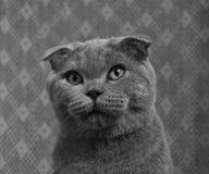 Piękny kot zamknięty w górę obraz royalty free