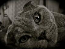 Piękny kot zamknięty w górę obrazy royalty free