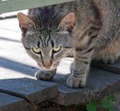 Piękny kot zamknięty w górę obrazy stock