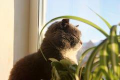 Piękny kota obsiadanie na okno zdjęcie stock