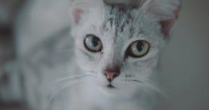 Piękny kota zbliżenie zbiory