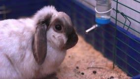 Piękny królik w klatce zbiory