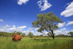Piękny krajobraz Drzewo, termitu kopiec w zieleni polu obraz royalty free