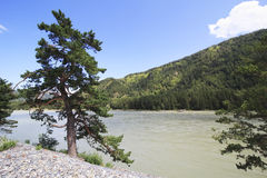 Piękny krajobraz halny rzeczny Katun. Altai. Zdjęcia Royalty Free