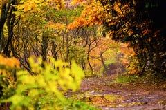 piękny krajobraz jesieni Jesień krajobraz z kolorowymi pierwszymi planami Fotografia Royalty Free