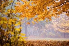 piękny krajobraz jesieni Jesień krajobraz z kolorowymi pierwszymi planami Zdjęcia Royalty Free