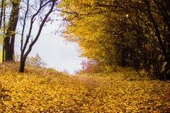 piękny krajobraz jesieni Jesień krajobraz z kolorowymi pierwszymi planami Obraz Royalty Free