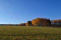 piękny krajobraz jesieni Zielona łąkowa trawa i błękitny bezchmurny niebo fotografia stock