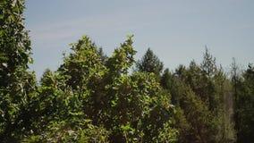 Piękny krajobraz od okno mieszkanie Gałąź drzewny ruch pod wiatrem zbiory wideo