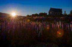 Piękny krajobraz ogród przy Jeziornym Tekapo, Południowa wyspa, Nowa Zelandia Obraz Royalty Free