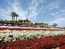 Piękny krajobraz petunia kwiaty zdjęcia stock