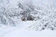 Piękny krajobraz przegapia zwartego las z gałąź zakrywać z gęstą warstwą śnieg obraz stock