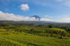 Piękny krajobraz ryż i góra tarasuje w Jatiluwih, Bali obraz stock