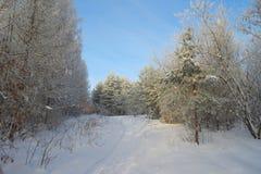 Piękny krajobraz w lesie Zdjęcie Royalty Free