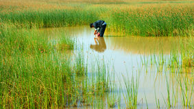 Piękny krajobraz, Wietnam wieś Fotografia Royalty Free