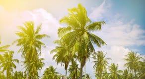 Piękny krajobraz z kokosowymi drzewkami palmowymi obraz stock