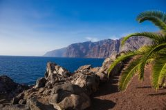 Piękny krajobraz z oceanem i skałami Ampuła kołysa morzem z drzewkiem palmowym i kaktusami zdjęcie royalty free