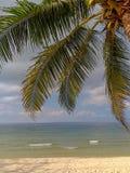 Piękny krajobraz z samotnym kokosowym drzewem obrazy royalty free