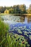 Piękny krajobraz z spokój wody jeziorem z żółtymi waterlilies, płochy, drzewa Fotografia Royalty Free