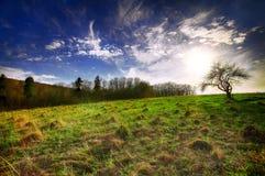 Piękny krajobraz z trawą, drzewami, niebem i słońcem, Obraz Royalty Free