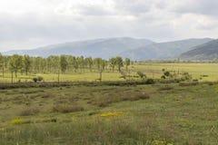 Piękny krajobraz, zieleni drzewa i pole z kolorów żółtych kwiatami, chmurzący niebo pod górami wzdłuż pola, jesteśmy linią kolejo fotografia stock