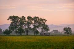 Piękny krajobraz zielona łąka z kwiatami i ziele Zdjęcie Royalty Free