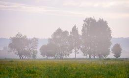 Piękny krajobraz zielona łąka z kwiatami i ziele Zdjęcia Royalty Free