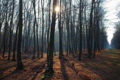 Piękny krajobraz zim nadzy drzewa z sunbeam zdjęcia stock