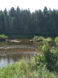 Piękny krajobrazowy lasowy brzeg rzeki w Środkowym Rosja zdjęcie royalty free
