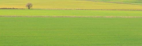 Piękny krajobrazowy tło, zieleni pola i drzewo, Fotografia Stock