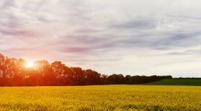 Piękny krajobrazu pole żółci okwitnięcia rapeseed pejzaż miejski, dramatyczny niebo z chmurami w tle Obraz Royalty Free