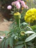 piękny kwiat żółty Obrazy Royalty Free