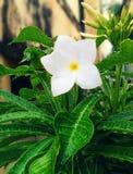 piękny kwiat fotografia stock