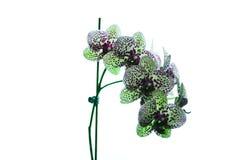 Piękny kwiat czerwony świeży storczykowy kwiat Zdjęcie Stock