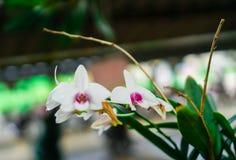 Piękny kwiat i niektóre no jesteśmy ładni w świeżym powietrzu Fotografia Stock