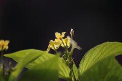 Piękny kwiat na roślinie Zdjęcia Stock